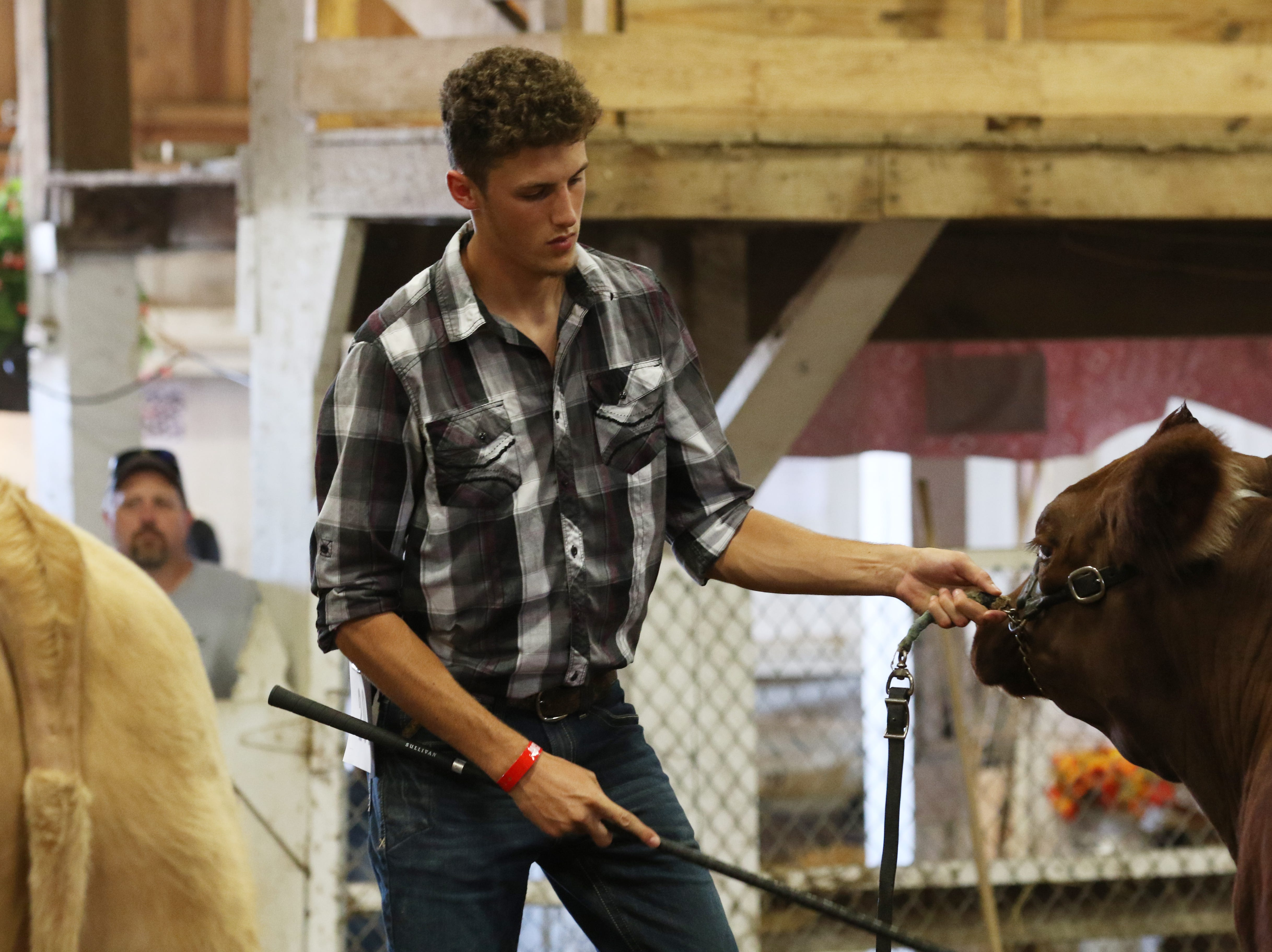 Junior Fair Steer judging at the Muskingum County Fair on Tuesday.