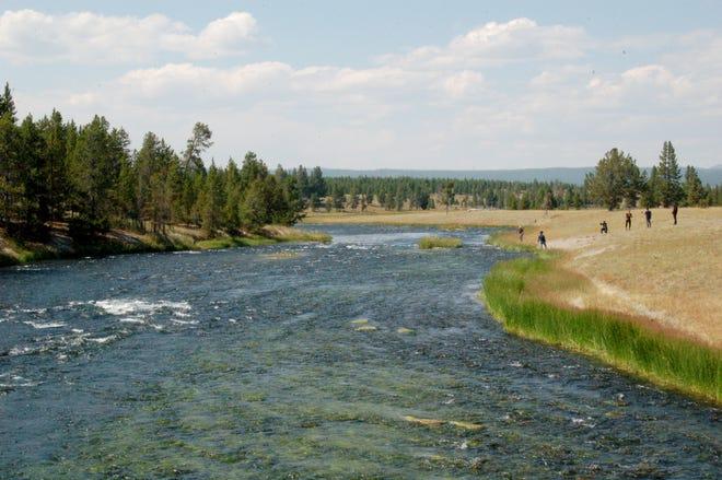 A river runs through Yellowstone National Park near Grand Prismatic Hot Spring.