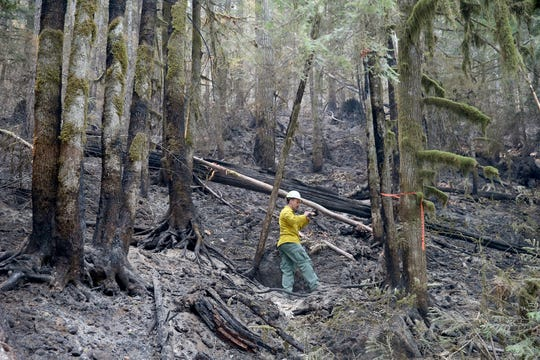 Jacob Welsh, a public information officer for the Maple Fire, takes photos of a burn area in summer 2018. Two men have been charged with setting the blaze while trying to take out a bee hive.