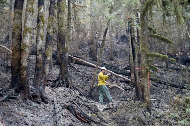 Jacob Welsh, a public information officer for the Maple Fire, takes photos of a burn area on Aug. 15.