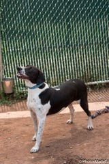 Johnny is a 1 1/2 old male hound mix that is looking for a new family.