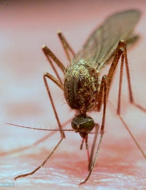 West Nile virus is spread by the bite of mosquitoes.