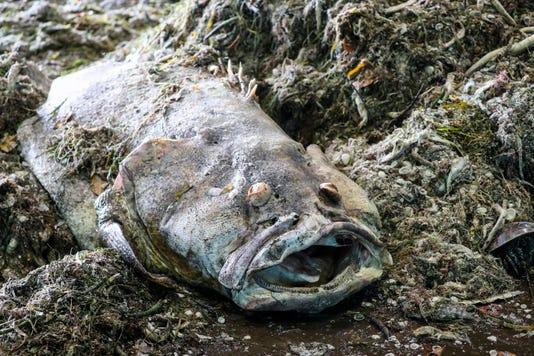 Fishdebris