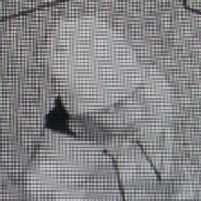 Hattiesburg police need help identifying burglary suspect