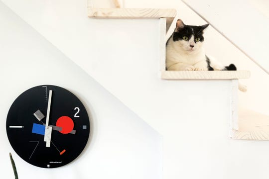 Noodle is one of four cats that share a 640-square-foot home with Margeaux Emery.