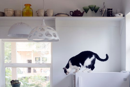 High shelving above the kitchen is one of the space-saving features of Margeaux Emery's home.