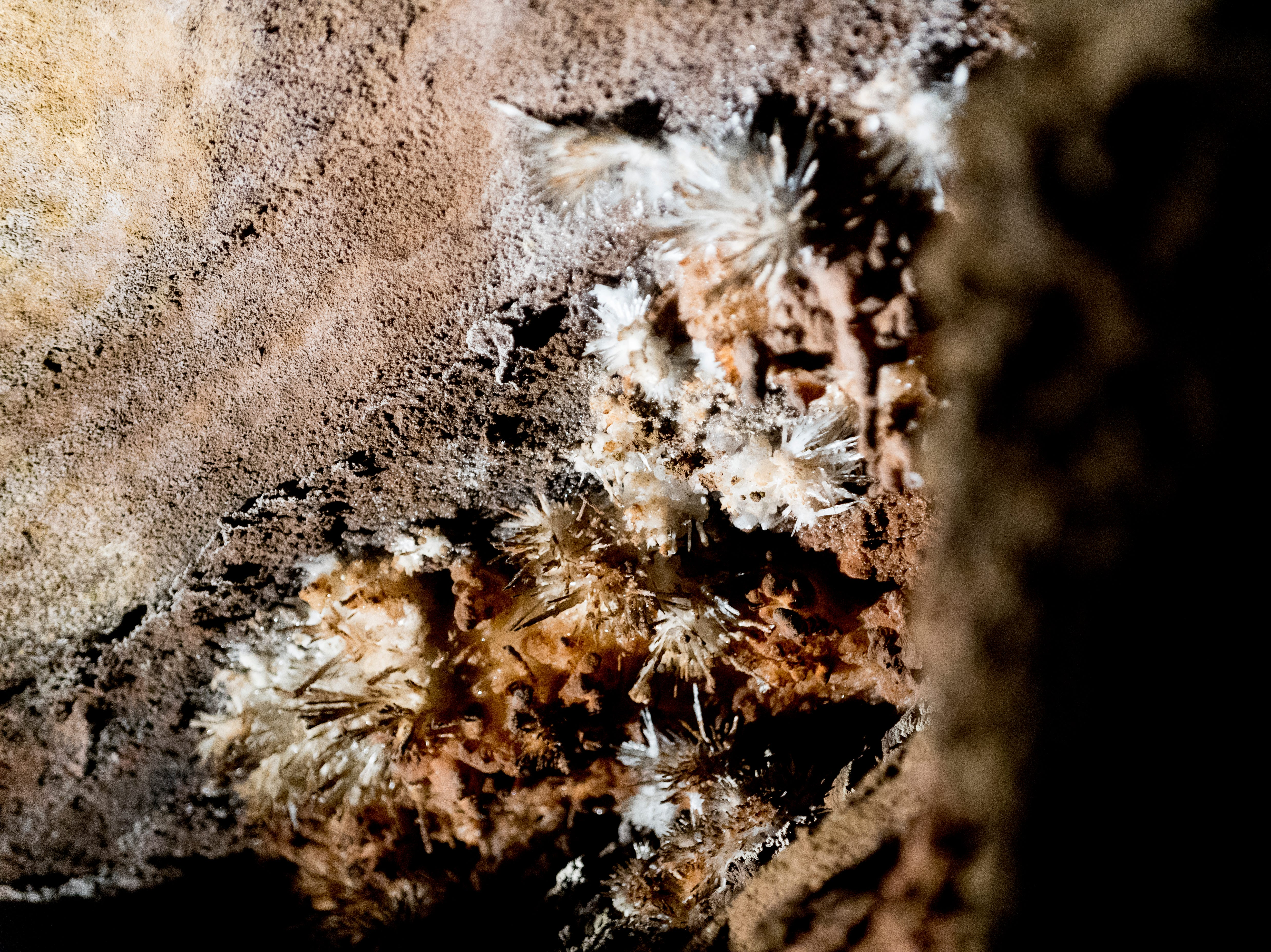 """ÒAnthodites,"""" fragile, spiky clusters commonly known as Òcave flowersÓ grow on the cave ceiling the Lost Sea Adventure underground cave attraction outside of Sweetwater, Tennessee on Wednesday, August 15, 2018. The cave system dates back some 20,000 years and today features points of interests like an old moonshine still, rock formations, Confederate Army graffiti and the popular boat ride in a natural lake stocked with 200 rainbow trout."""