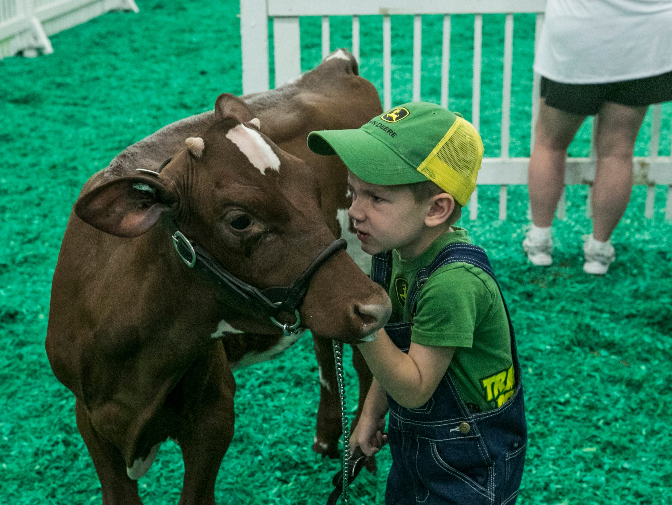 Evan Nichols, 4, of Spencer County angrily talks to his calf while watching the dairy cow judging at Broadbent Arena on the opening day of the 2018 Kentucky State Fair.