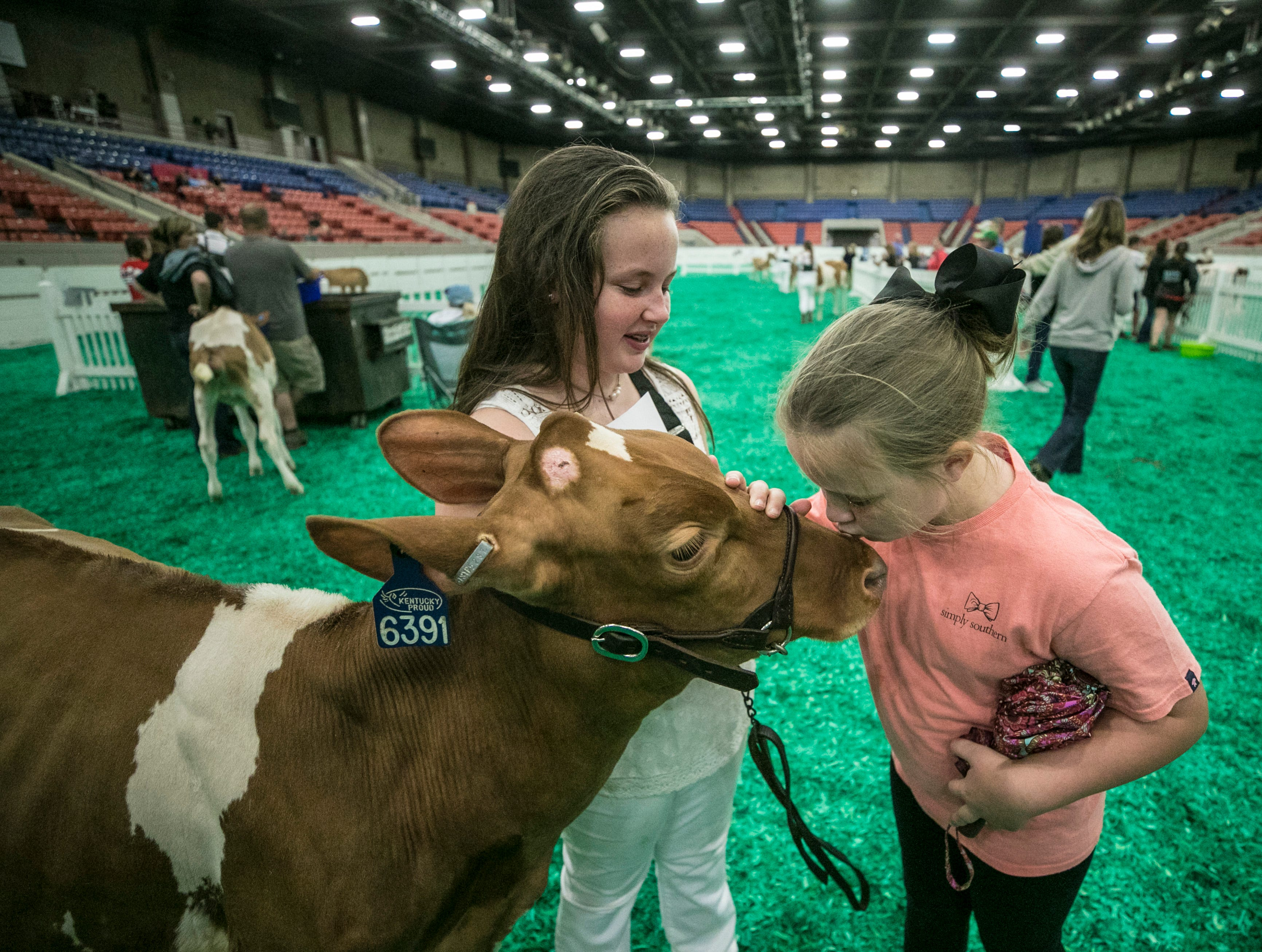 Molly Shewmaker laughs as  Megan Shewmaker kisses Marli, a dairy cow, outside the judging area on the opening day of the 2018 Kentucky State Fair.