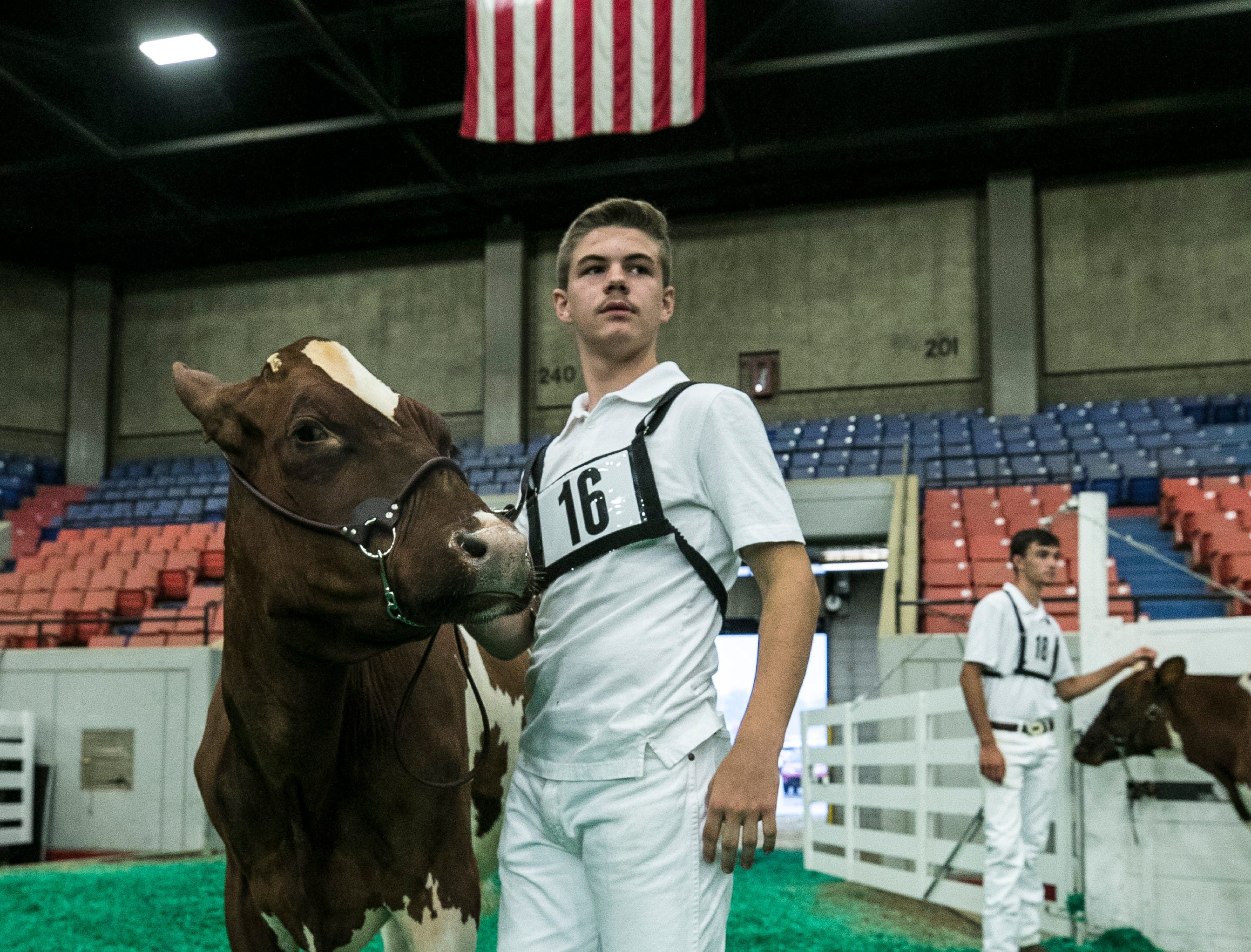 Twelve-year-old Charles Branstetter of Metcalf County holds his milking shorthorn dairy cow inside Broadbent Arena on the opening day of the 2018 Kentucky State Fair.