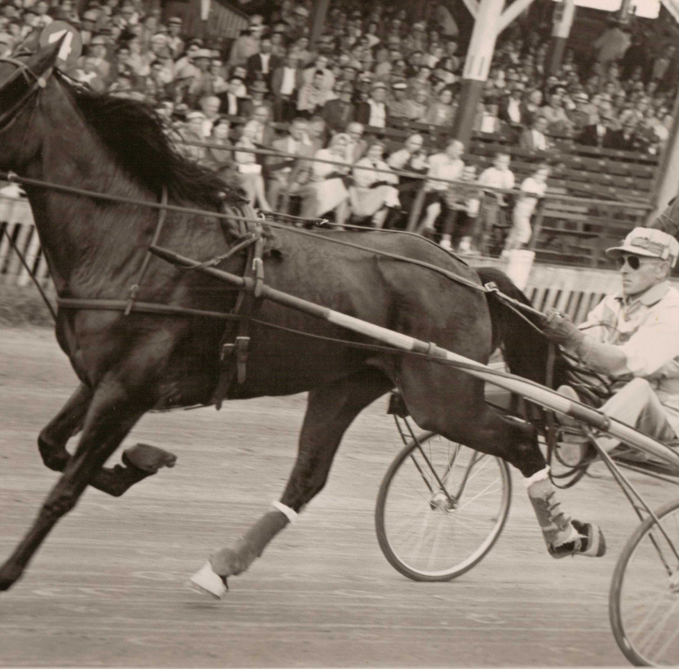Manitowoc County Fair once drew some of Wisconsin's best race horses | Preserving the Past