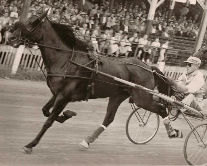 Portrait of a race horse and sulky, owned by Schuette Farms and raced at the Manitowoc County Fair in the 1950s-1960s.
