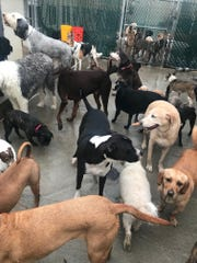 Dogs at Club Bark after being rescued from flood water following a rainstorm last Saturday.