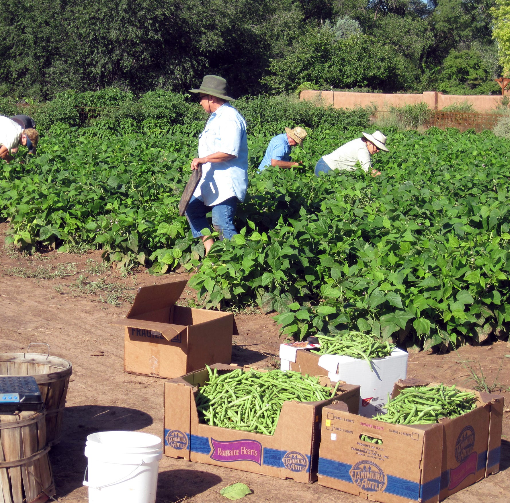 Master Gardeners to hold statewide conference in Albuquerque