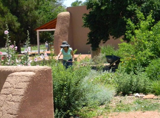 A volunteer at the Gutiérrez-Hubble Home works in one of the demonstration gardens that include flower beds, vegetable gardens, vineyard and orchards.