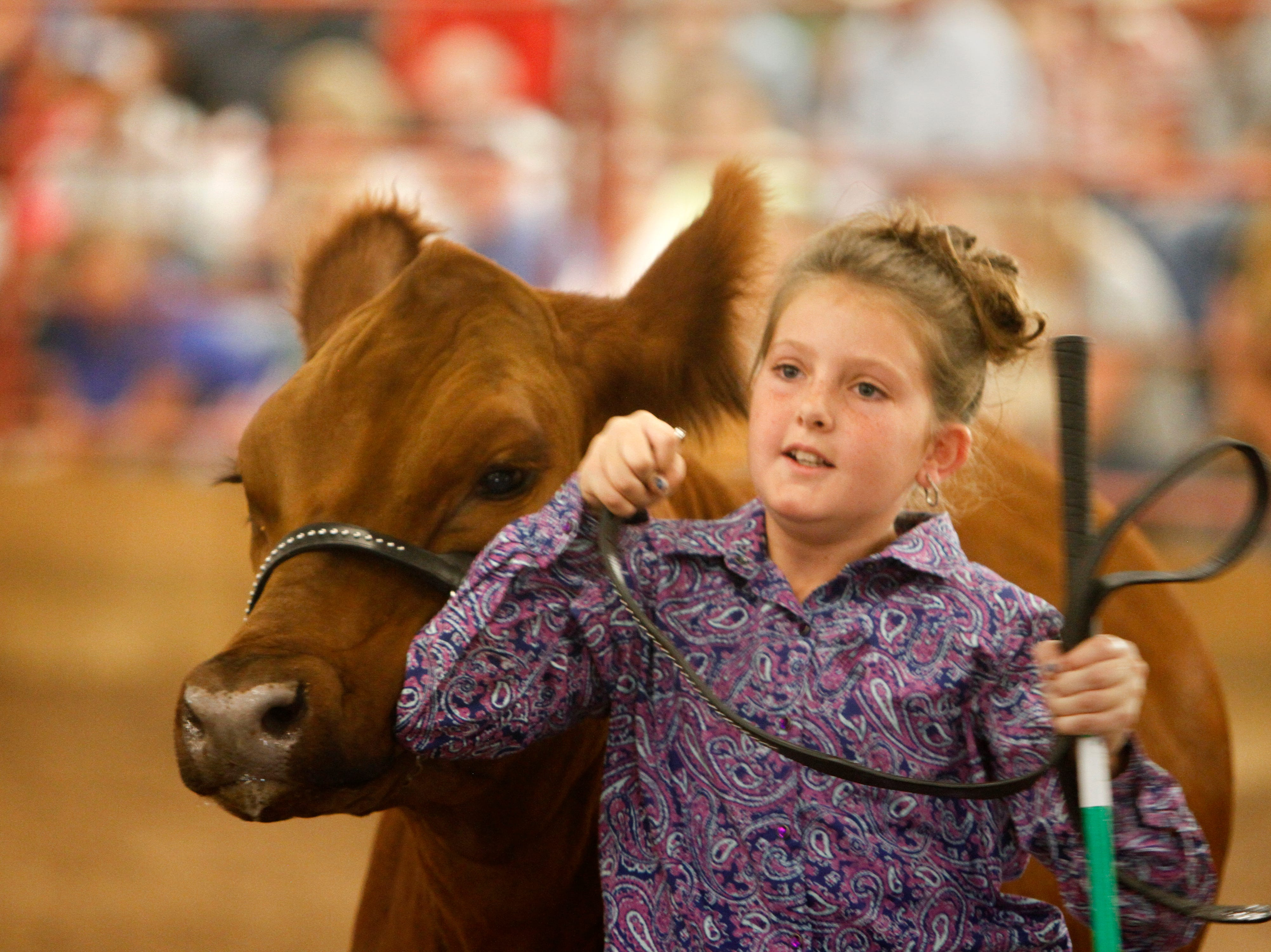 Charliann Nunn exits the arena with her steer Snickerdoodle after the conclusion of the market steer class 1 category judging, Thursday, Aug. 16, 2018 during the annual beef show at the San Juan County Fair at McGee Park in Farmington.