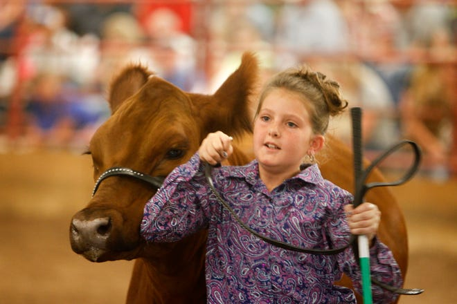 Charliann Nunn exits the arena with her steer Snickerdoodle after the conclusion of the market steer class 1 category judging Thursday during the annual beef show at the San Juan County Fair at McGee Park in Farmington.