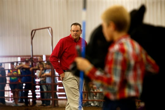 Beef show judge Ben Cooley examines steers Thursday during the annual beef show at the San Juan County Fair at McGee Park in Farmington.