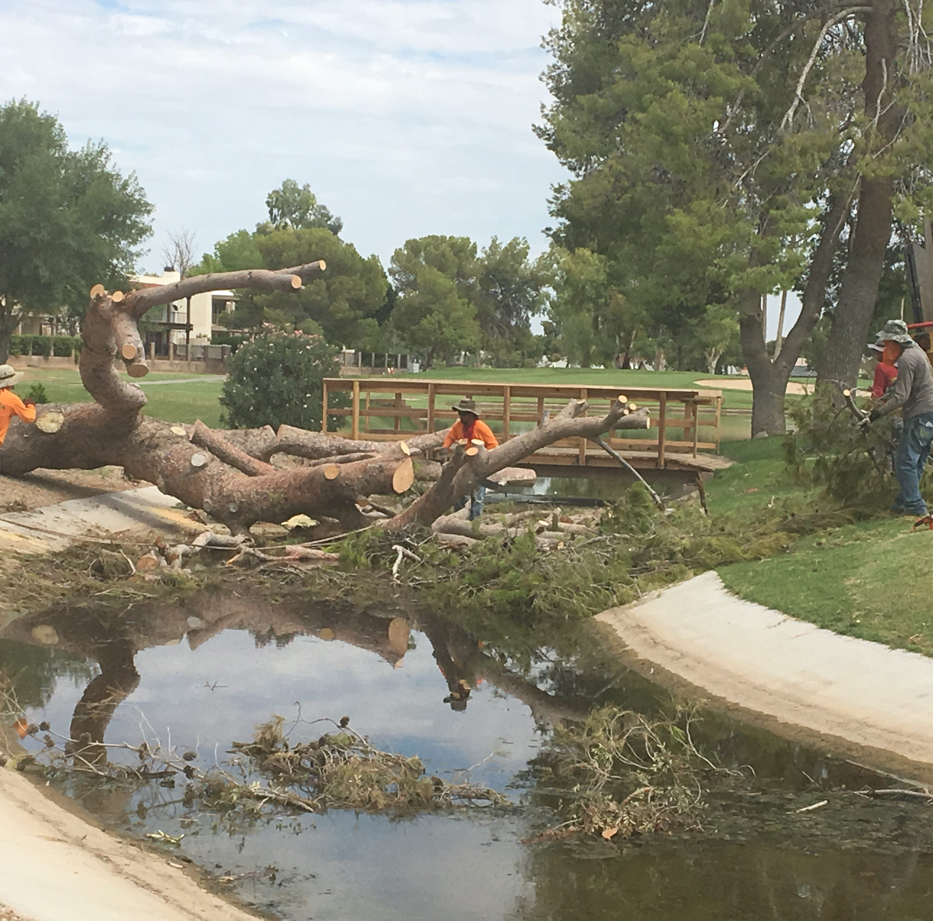 Mesa's Dobson Ranch Golf Course loses 57 trees in one week of monsoon storms