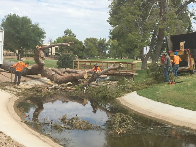 The Dobson Ranch Golf Course in Mesa lost 57 trees during a week of monsoon storms in August 2018.