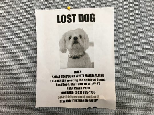 Riley, a 10-pound white Maltese, was last seen near Clark Park in Tempe.