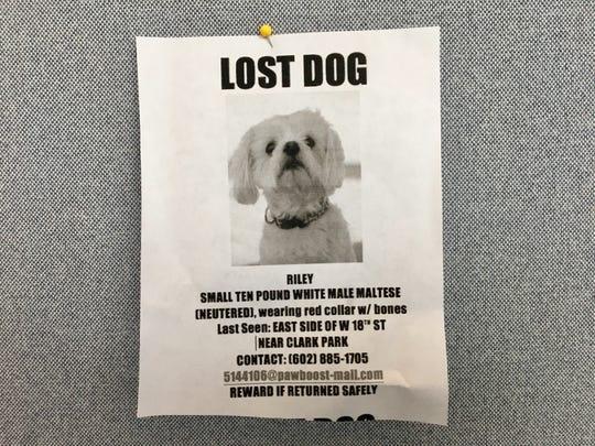 Riley, a 10-pound white Maltese, was last seen near Clark Park in Tempe.