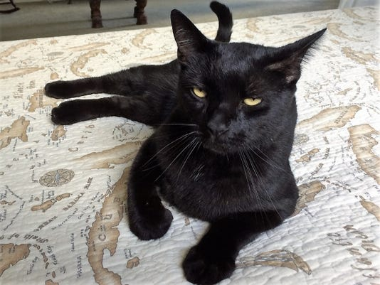 0822 Ynmc Catty Tristan With Shiny Black Coat