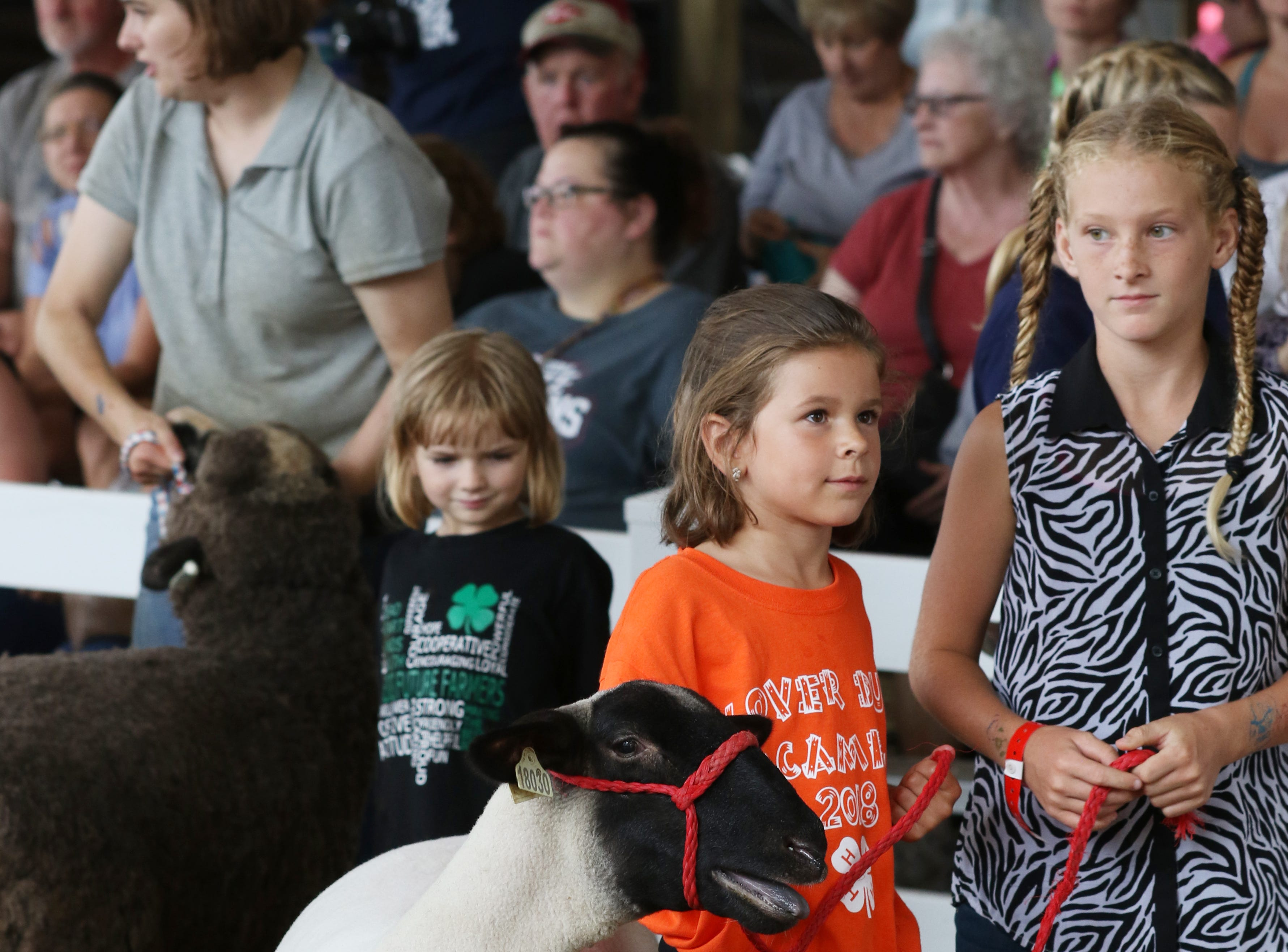The Junior Fair Pee Wee Sheep Show at the Muskingum County Fair on Thursday.