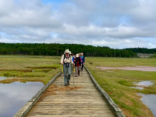 A tour group explores salt marsh flats in Irving Nature Park in Saint John, New Brunswick, Canada. The ecologically rich area attracts more than 200 species of migratory birds each year, making it a destination for birdwatchers.