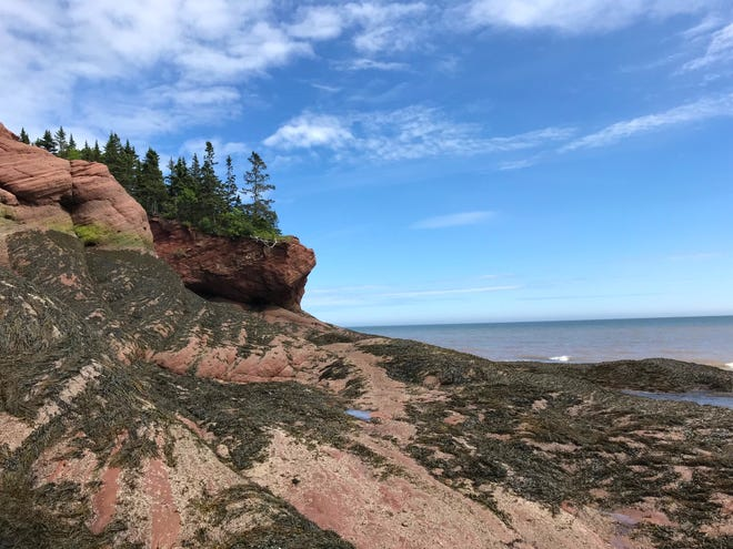 Seaweed covers the sandstone cliffs along the Bay of Fundy in St. Martins, New Brunswick. At high tide, the seaweed is covered with water, creating a dramatic, changeable landscape.