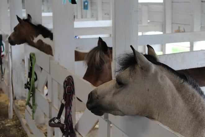 Miniature horses are a favorite at the Calhoun County Fair.