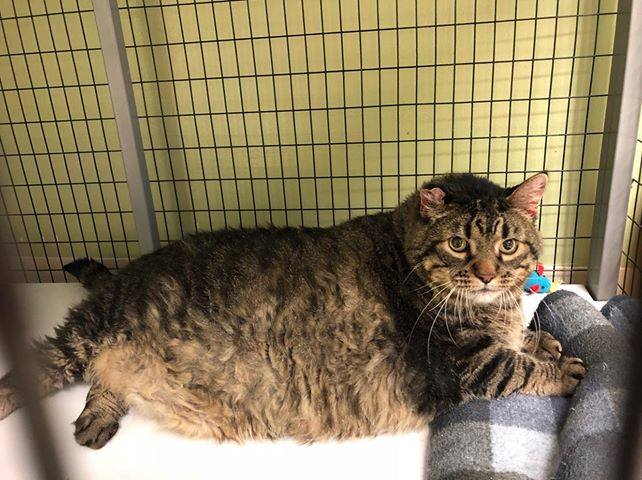 Meatloaf the Cat was waiting for his forever home at Kings Harvest Pet Rescue in Davenport when he went viral. He recently died due to liver disease