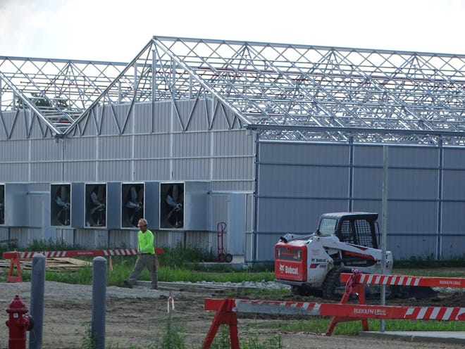 Standard Wellness' medical marijuana cultivation facility in Gibsonburg should be completed in October. The company was awarded a provisional processing license by the state's department of commerce Friday.