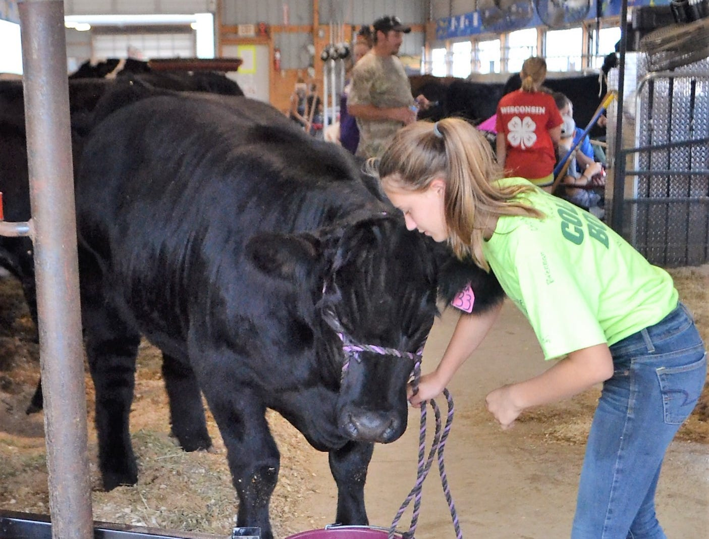 Megan Wagner, 13, of Suring, a member of Northern Riders 4-H Club, leads a club members's cow for a drink at the Oconto County Fair on Thursday, Aug. 16.