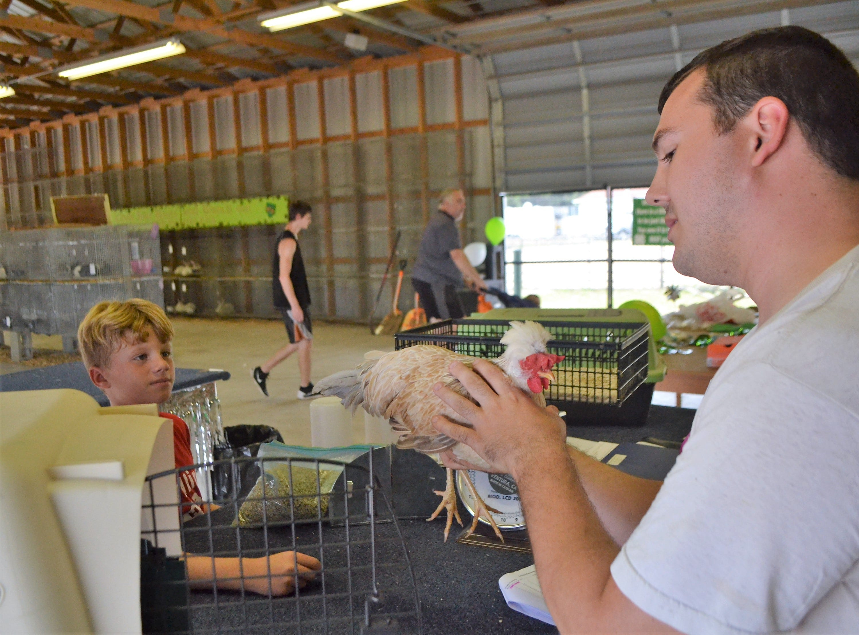 Croix Gardebrecht, 8, of Oconto Falls, a member of Willing Workers 4-H Club, watches as Keith Schardt checks over a chicken Croix was entering Thursday, Aug. 16 in the poultry contest the next day.