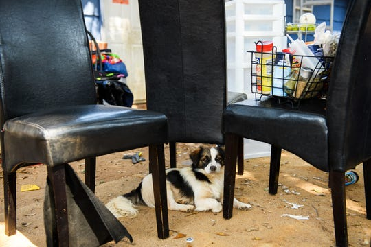 Tenants A dog takes shelter from the sun under the shade of dining room chairs left outside of the apartments at 5 Daniel Avenue on Thursday, Aug. 16, 2018.