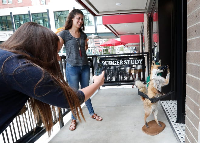 """St. Elmo Steak House Marketing Manager Charlotte Gretter, left, and Gabi White, office administrative assistant, snap a photo of Winston, a beloved taxidermy fox stopping for a burger at Burger Study on Friday, Aug. 17, 2018. Winston was stollen from St. Elmo Steak House's 1933 Lounge on Friday Aug. 10. The restaurant offered at #250  gift card reward for his safe return.  The """"foxnappers"""" returned Winston via an Uber."""