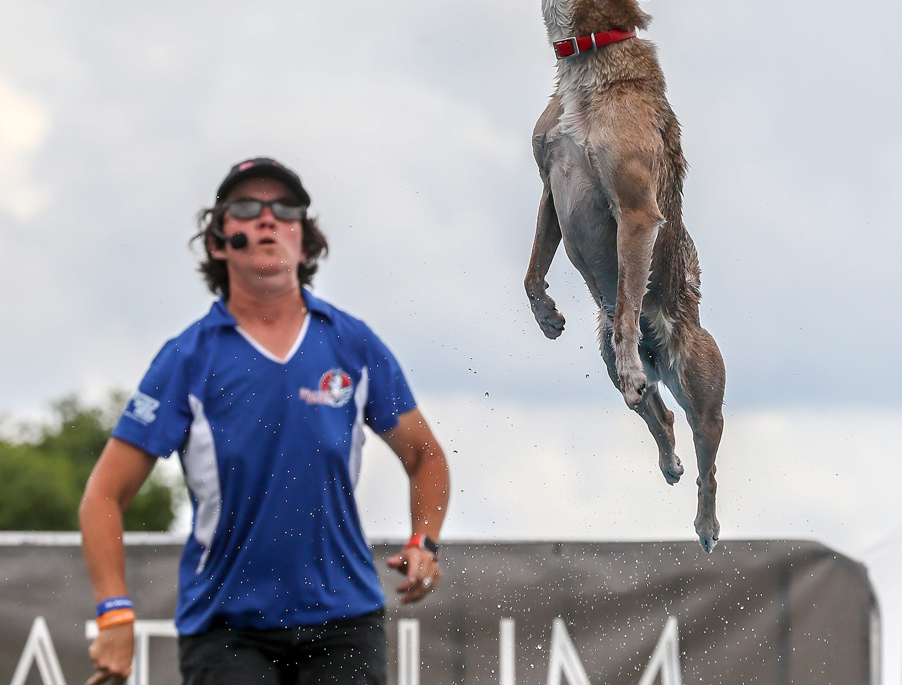 Nadja throws the ball to HiHo who made an attempt to catch it before hitting the water during the Marvelous Mutts show at the Kentucky State Fair.August 17, 2018