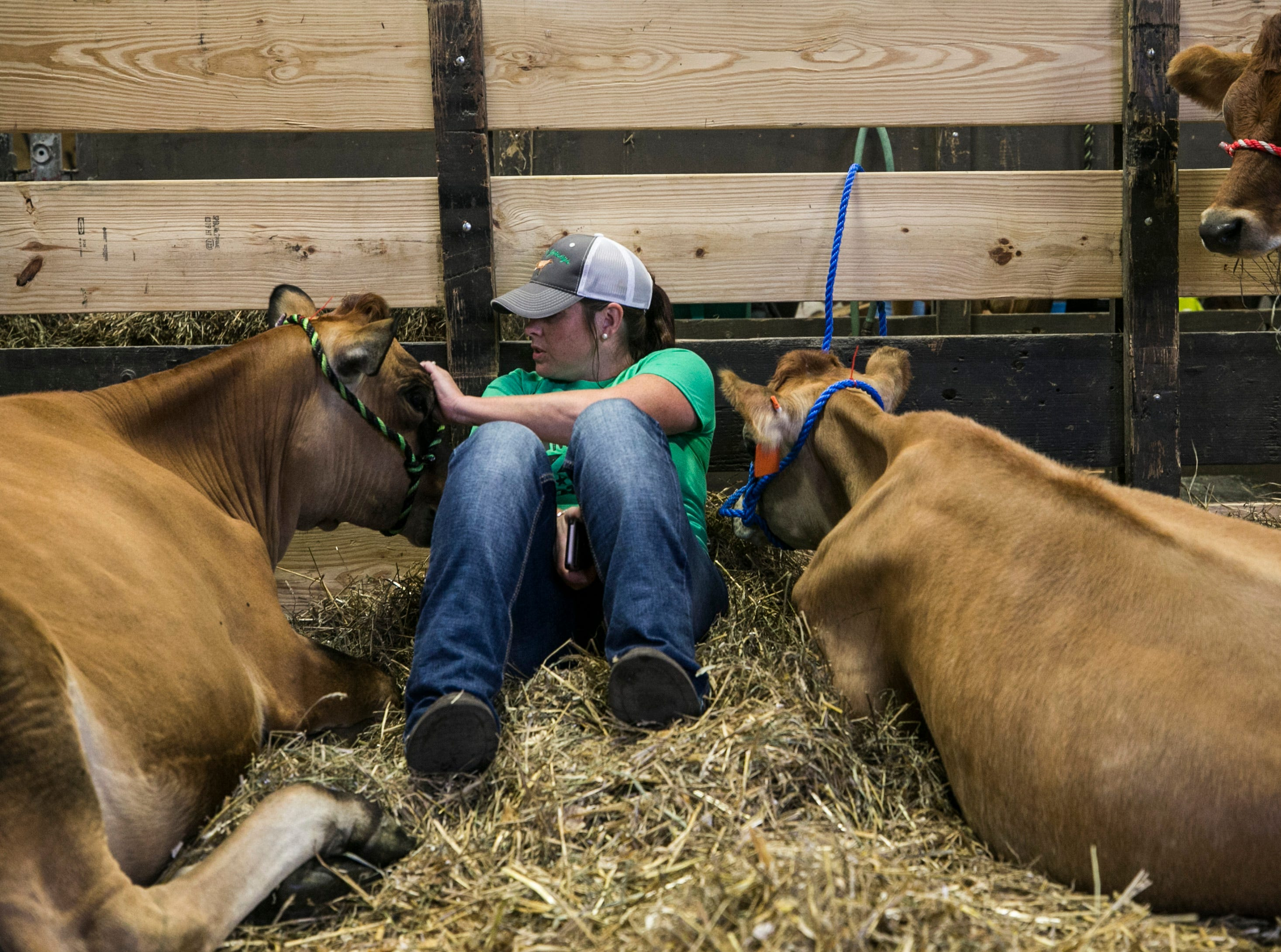 Alicia Butler of Spencer County gets a short break between her family's Jersey cows on the first day of the Kentucky State Fair. She said the cows love to snuggle.