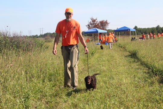 An American water spaniel puppy is led down a path on an upland portion of the 2018 American Water Spaniel Club Specialty and Hunt Test in Gordon, Wis.