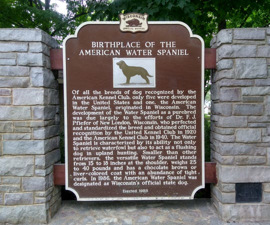 A marker in New London, Wis. is dedicated to the American water spaniel, the official Wisconsin dog breed. Dr. Fred J. Pfiefer, a physician who lived in New London, led a push in the early 1900s to get the breed recognized by the United Kennel Club and American Kennel Club. It was named Wisconsin's official dog in 1986.