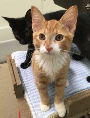 The Oshkosh Area Humane Society will host Kittenpalooza Saturday.
