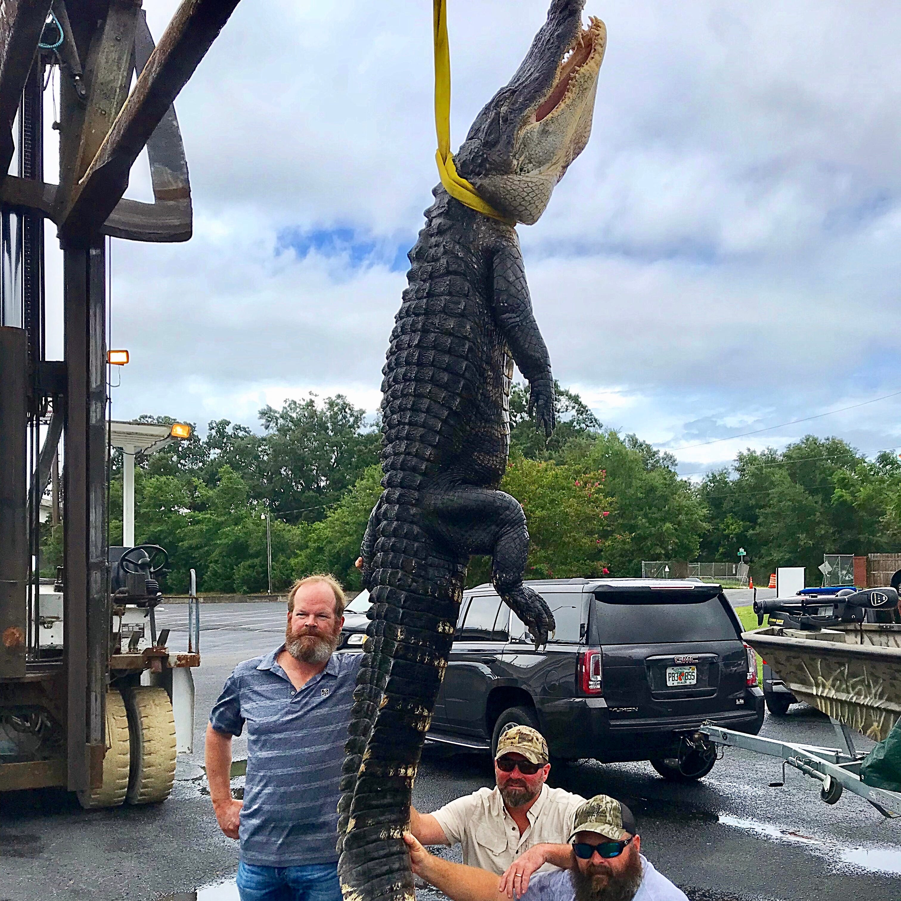 12-foot gator caught on first day of alligator hunting season by Pensacola charter