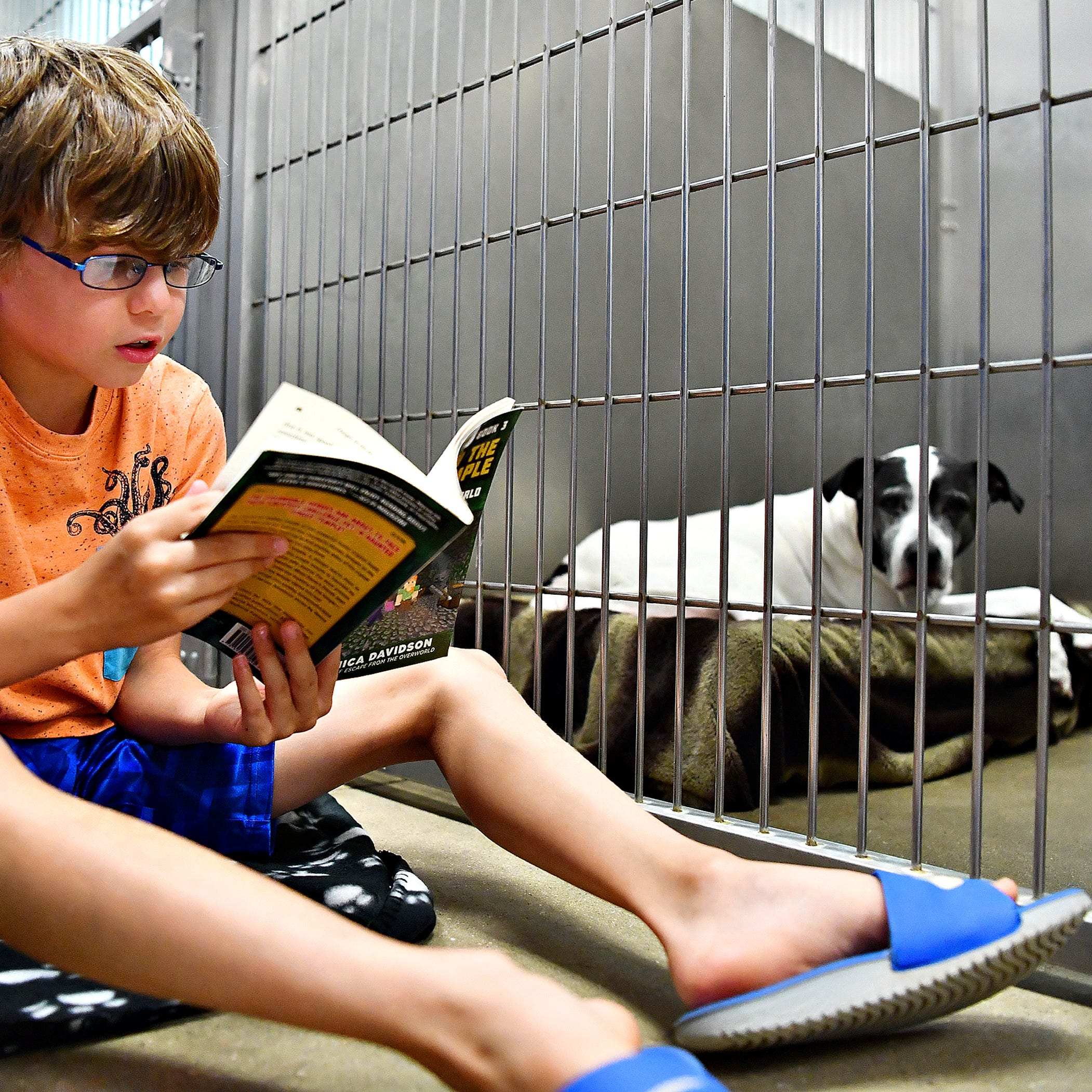Logan Knaper, 10, of York Township, reads to Mia, an adoptable, female, black and white, 11-year old American Staffordshire Terrier during the Tales for Tails kickoff event at York County SPCA in Manchester Township, Friday, Aug. 17, 2018. The organization hopes to hold the event twice a month. For more information go to their website at: www.ycspca.org. Dawn J. Sagert