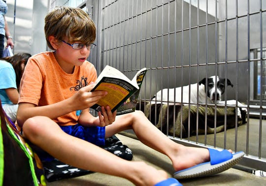 Logan Knaper, 10, of York Township, reads to Mia, a black-and-white American Staffordshire terrier, during the Tales for Tails kickoff event at the York County SPCA in Manchester Township, Friday, Aug. 17, 2018. Mia is an 11-year-old female available for adoption. The SPCA hopes to hold the reading event twice a month. For more information, go to their website at www.ycspca.org. Dawn J. Sagert