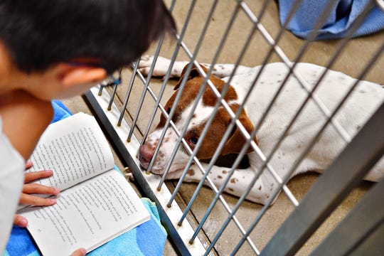 Butter Scotch, a 2-year-old adoptable female pit bull, looks on as Nick Icenroad, 10, of Springfield Township, one of about 40 first- through sixth-graders, reads aloud during the Tales for Tails kickoff event at the York County SPCA in Manchester Township, Friday, Aug. 17, 2018. The organization hopes to hold the event twice a month. For more information, go to their website at: www.ycspca.org. Dawn J. Sagert