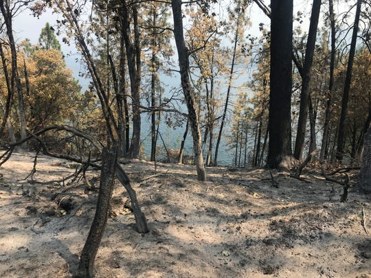 Trees damaged by the Carr Fire dot the steep hillsides at Whiskeytown National Recreation Area.