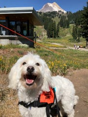 This annual fundraiser hosted and benefiting the Oregon Humane Society invites you and your dog to relax in the mountains Saturday, Aug. 25.