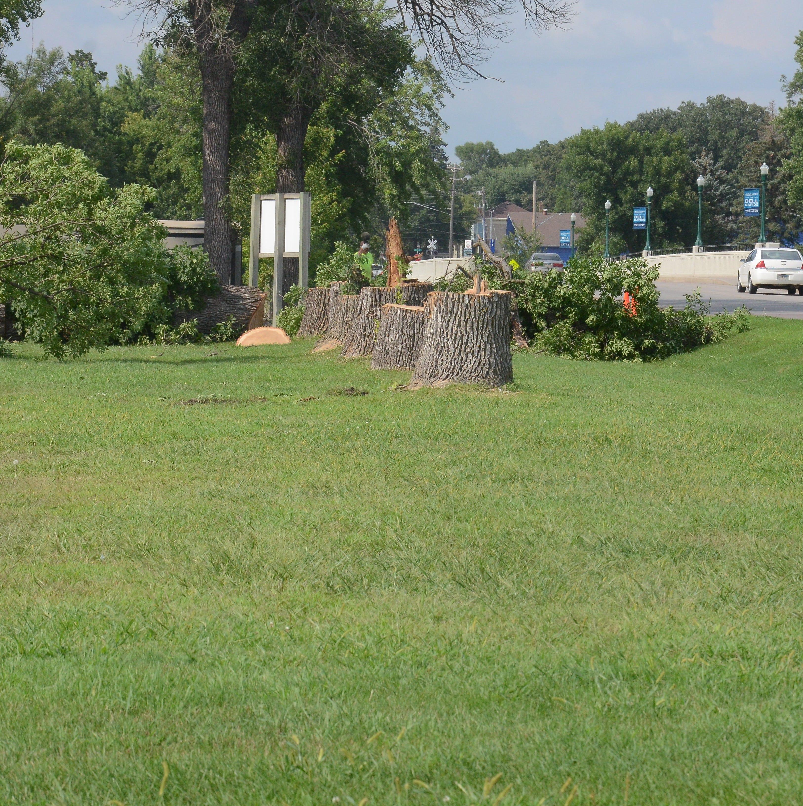 Ash trees come down around Rickeman, campground
