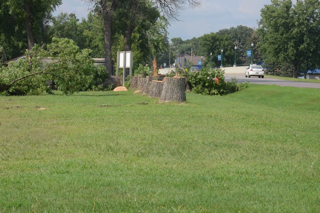 Ash tree stumps  remain after the city of Dell Rapids had some trees removed along Garfield Avenue near the campground and Rickeman Field.